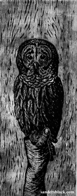 Owl by Sanders Black