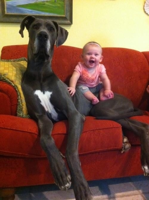 21 dogs who don't realize how big they are